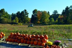 Jesieni żniwo Obrazy Royalty Free