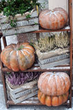 Jesieni żniwo Obraz Royalty Free