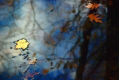 jesienią odbicia zdjęcia royalty free
