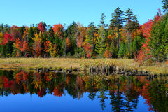 Jesieni odbicia Obrazy Stock