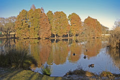 Jesieni odbicia Obrazy Royalty Free