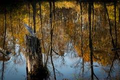 Jesieni odbicie Fotografia Stock