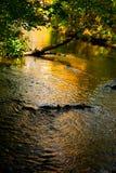 Jesieni odbicie Fotografia Royalty Free