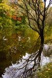 Jesieni odbicie obraz royalty free