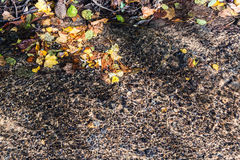 Jesieni odbicie w strumieniu Obraz Stock