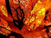 Jesieni ognisko Zdjęcia Stock