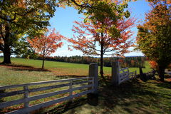 Jesieni ogrodzenie Zdjęcie Royalty Free