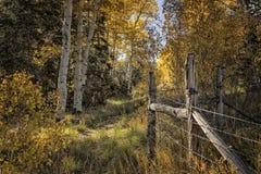 Jesieni osiki i Płotowa linia Obrazy Stock