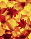 jesienią otoczenia Obraz Royalty Free