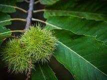 Jesieni owoc Zdjęcie Stock