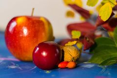 Jesieni owoc i coloured liście przeciw tłu błękitnemu i białemu fotografia royalty free