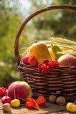 Jesieni owoc i warzywo w koszu w ogródzie sezon zdjęcie stock