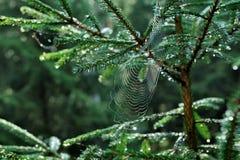 Jesieni pajęczyny w zielonym lesie zdjęcia stock