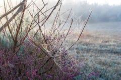 Jesieni pajęczyny na krzakach Zdjęcia Royalty Free