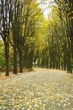 Jesieni parkowa aleja Zdjęcie Royalty Free