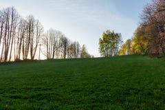 Jesieni parkowy tło Jesieni malowniczy drzewo w pogodnym jesień parku zaświecał światłem słonecznym - jesieni drzewo w świetle sł Zdjęcie Stock