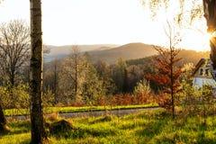 Jesieni parkowy tło Jesieni malowniczy drzewo w pogodnym jesień parku zaświecał światłem słonecznym - jesieni drzewo w świetle sł Obrazy Royalty Free
