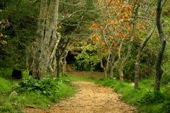 jesienią ' the pathway ' Zdjęcia Royalty Free