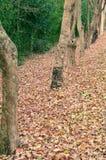 Jesieni Pełna podłoga Obrazy Royalty Free