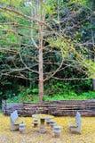 Jesieni piękno Ginkgo Biloba w Nanxing mieście Zdjęcia Royalty Free