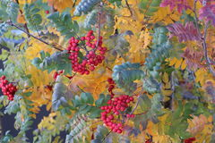 Jesieni piękno Fotografia Royalty Free