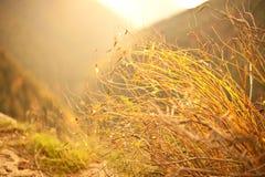 Jesieni piękno natura Obrazy Royalty Free