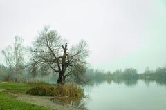 Jesieni piękno w naturalnym jeziorze Obraz Royalty Free