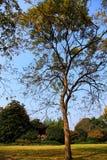 Jesieni piękno Xihu, Zachodni jezioro Zdjęcia Royalty Free