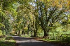 Jesieni plażowi drzewa, Anglia Zdjęcia Stock