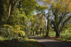Jesieni plażowi drzewa, Gloucestershire, Anglia Zdjęcia Royalty Free