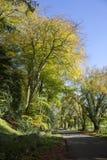 Jesieni plażowi drzewa na pasie ruchu, Gloucestershire Obrazy Royalty Free