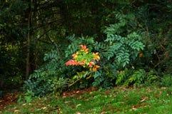 Jesieni pluśnięcie Obrazy Royalty Free