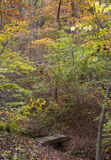 Jesieni podwyżka Zdjęcie Stock