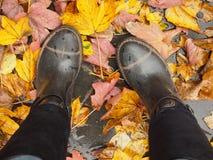 Jesieni pogoda deszcz i spadać liście - Fotografia Stock