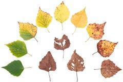 Jesieni pojęcie, pełnoletnie zmiany liście, starzeje się sceny narodziny śmierć, suszy obraz royalty free