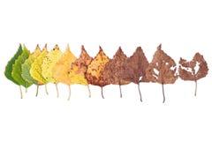 Jesieni pojęcie, pełnoletnie zmiany liście, starzeje się sceny narodziny śmierć, suszy zdjęcia royalty free