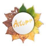 Jesieni pojęcie, pełnoletnie zmiany liście, starzeje się sceny narodziny śmierć, suszy zdjęcie stock
