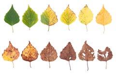 Jesieni pojęcie, pełnoletnie zmiany liście, starzeje się sceny narodziny śmierć, suszy fotografia stock