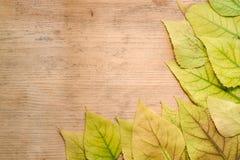 Jesieni pojęcie - rama kolor żółty opuszcza na drewnianej desce Zdjęcie Royalty Free