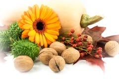 Jesieni pojęcie z banią Obraz Stock