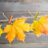 Jesieni pojęcie z liśćmi klonowymi na arkanie na drewnianym tle Zdjęcia Stock