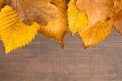 Jesieni pojęcie z textured kolorów żółtych brudnymi liśćmi nad drewnianym bac Zdjęcia Stock