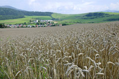 jesienią pola pszenicy krajobrazu Fotografia Stock