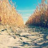 jesienią pola pszenicy krajobrazu Fotografia Royalty Free