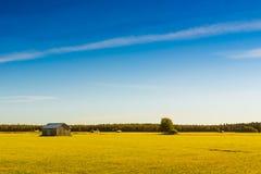 Jesieni pola złoto Zdjęcie Royalty Free