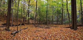 Jesieni polana Obrazy Stock