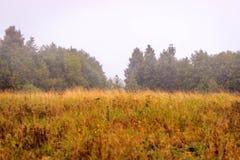 jesieni pole na chmurnym dniu Obraz Royalty Free