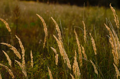 Jesieni pole przy zmierzchem Fotografia Stock