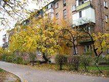 jesieni popołudniowy przespacerowanie wzdłuż miasto ulicznego widoku drzewa z żółtym ulistnieniem obrazy stock