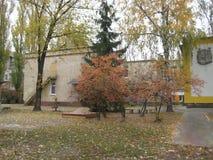 jesieni popołudniowy przespacerowanie wzdłuż miasto ulicznego widoku drzewa z żółtym ulistnieniem zdjęcia stock